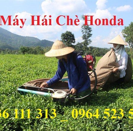 Máy Thu Hoạch Chè Honda GX35