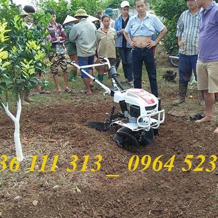 Máy Xới Đất Đa Năng Trâu Vàng Lên Luống, Đào Bồn