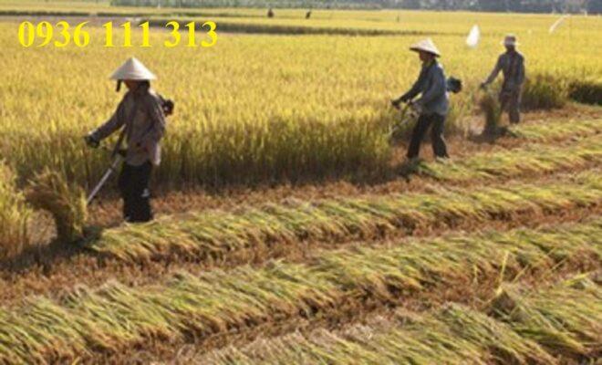 Chế Máy Gặt Lúa Cầm Tay Từ Máy Cắt Cỏ
